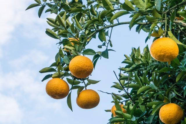 読む 臭 何と 橙 は