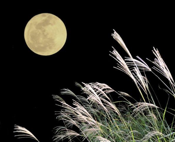 が 返し 方 綺麗 月 です ね