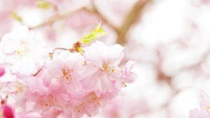 【2019年度版】春の土用期間!土いじりができる間日はいつ?食べるとよい物は?
