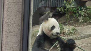 弁天門で入場券を買い、表門から入ると?平日の上野動物園混雑状況シャンシャン【2月21日】